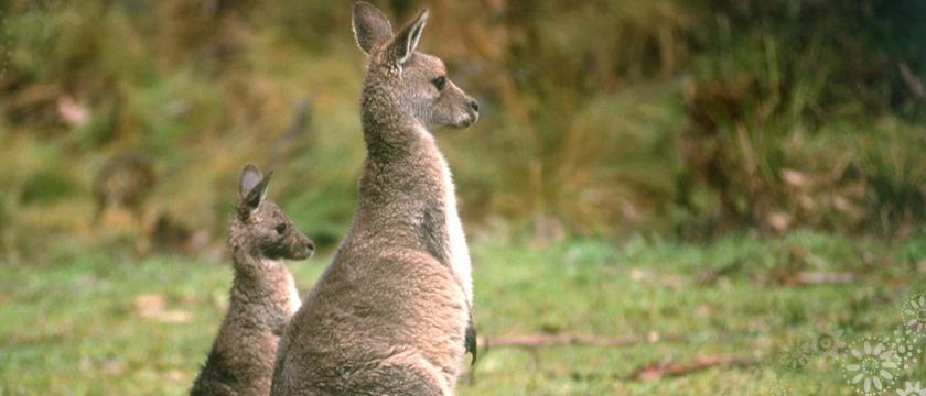 tidbinbilla australia