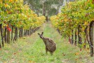 10 điều có thể bạn chưa biết về nước Úc
