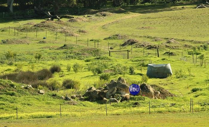 Nông trại Úc - Việc làm tại Úc