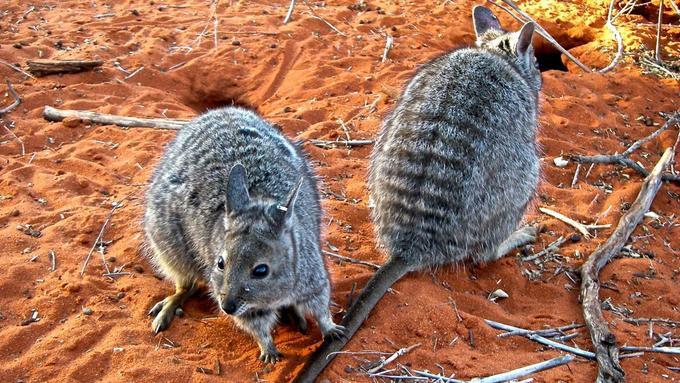 Hòn đảo bí ẩn của Australia
