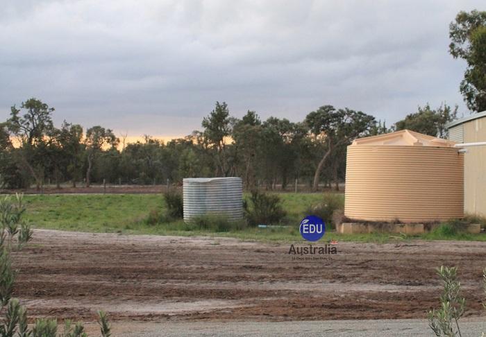 Nông trại Úc 3- Việc làm tại Úc