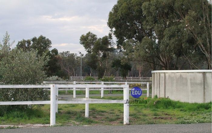 Nông trại Úc 5 - Việc làm tại Úc