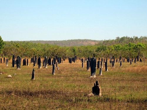 Nghĩa địa mối khổng lồ ở Australia - 2