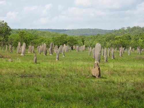 Nghĩa địa mối khổng lồ ở Australia - 3