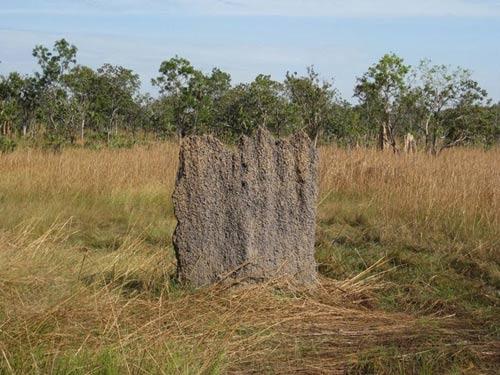 Nghĩa địa mối khổng lồ ở Australia - 5