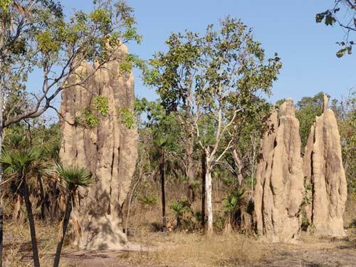 Nghĩa địa mối khổng lồ ở Australia - 8