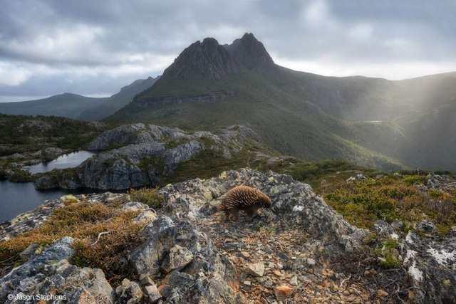 Vẻ đẹp Australia qua bộ ảnh tự nhiên - Ảnh 2.